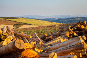 voigts-group-farming-sugar-timber-earthmoving-kzn-kwazulu-natal-2